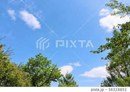 青空と新緑の風景 36328852