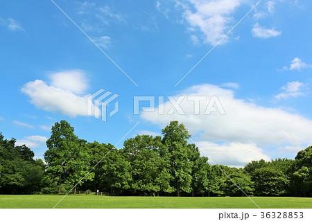 青空と新緑の公園 36328853