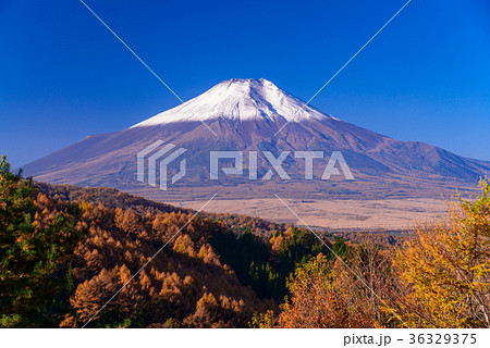 紅葉の二十曲がり峠と冠雪した富士山 36329375