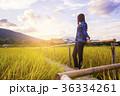 Woman traveler admiring yellow rice field scenery 36334261