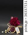 ぼたん 水引 花の写真 36337531