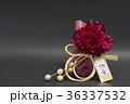 ぼたん 水引 花の写真 36337532