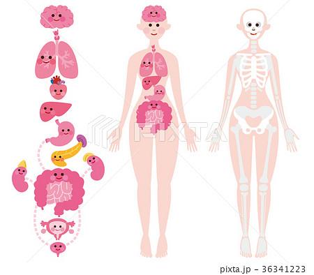 内臓 骨格 全身 デフォルメ 36341223