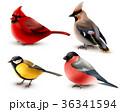 鳥 羽 鮮やかのイラスト 36341594
