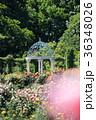 京成バラ園 バラ園 バラの写真 36348026