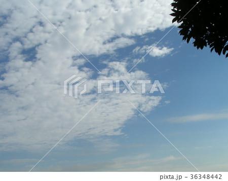 深まった秋の青空と白い雲 36348442