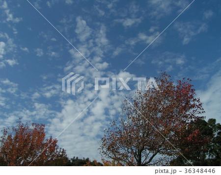 深まった秋の青空と白い雲 36348446