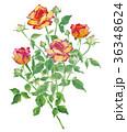 バラ 植物 花のイラスト 36348624