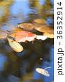 紅葉の池  36352914