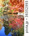 道庁赤レンガ庁舎前庭 36352993