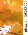 紅葉  36352994