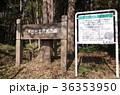 八木が谷北市民の森 船橋市 36353950