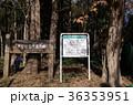 八木が谷北市民の森 船橋市 36353951