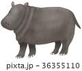 挿し絵 動物 哺乳類のイラスト 36355110