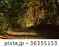 木漏れ日 森林 秋の写真 36355153