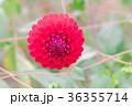 背景 花 お花の写真 36355714