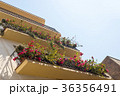 Building with balconies decorated flowers 36356491