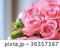 鑽戒與玫瑰 36357387