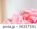 鑽戒與玫瑰 36357391