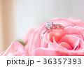 鑽戒與玫瑰 36357393