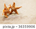 Meeting two starfish. The concept of a triotic 36359906