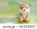 戌年 犬 戌の写真 36359907