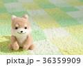 戌年 犬 戌の写真 36359909