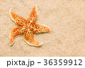 Beautiful starfish against a background of sand 36359912