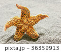 Beautiful starfish against a background of sand 36359913