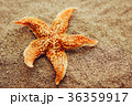 Beautiful starfish against a background of sand 36359917