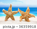 Two sea stars on the background of the sea shore 36359918