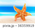 Dancing starfish against the background of the sea 36359919