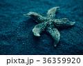 Starfish under water. Beautiful underwater world 36359920