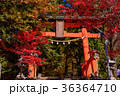 浅間神社 秋 紅葉の写真 36364710