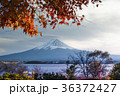 河口湖 冨士山 富士の写真 36372427