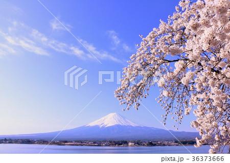 美しい日本の春 富士山と桜 36373666