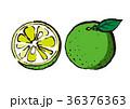 すだち 柑橘類 フルーツのイラスト 36376363