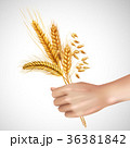 Spikelets In Hand Realistic Composition 36381842