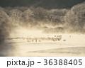タンチョウ 鶴 霧の写真 36388405