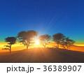 樹と日の出 36389907
