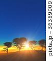 樹と日の出 36389909