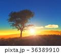 樹と日の出 36389910