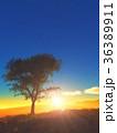 樹と日の出 36389911
