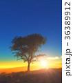 樹と日の出 36389912