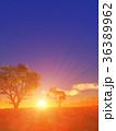 樹と日の出 36389962