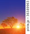 樹と日の出 36389963