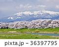 春 桜並木 一目千本桜の写真 36397795