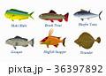 サカナ 魚 魚類のイラスト 36397892