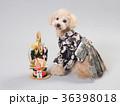 犬 門松 晴れ着の写真 36398018