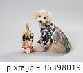 犬 門松 晴れ着の写真 36398019